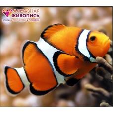 Рыба клоун Набор для выкладывания стразами 20х18 Алмазная живопись АЖ-1061