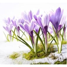 Песня весны Набор для вышивания бисером 28х34 (23х28) Матренин Посад 0175/Б