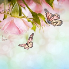 Песня роз Набор для вышивания бисером 41х41 (34х34) Матренин Посад 0155/Б