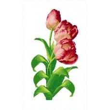 Тюльпаны Рисунок на канве 36х49 Каролинка КК 410