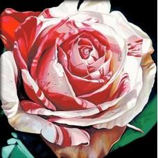 Алая роза набор для выкладывания стразами 50х50 Jing Cai Ge Diamond Painting DIY (Honey Home) 1251