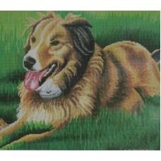 Собака на лужайке мозаика на подрамнике 40х50 40х50 Painting Diamond GF0975