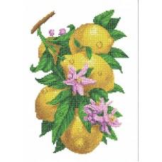 Ветка с лимонами Рисунок на ткани 26х36 Каролинка ТКБЦ 3058