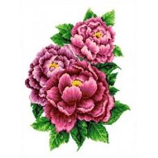 Розовые пионы Рисунок на канве