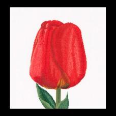 Набор для вышивания Красный тюльпан, канва Aida 18 ct