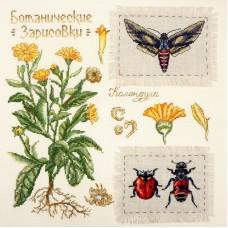 Набор для вышивания Ботаника: Календула