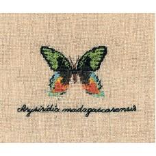 Набор для вышивания: PAPILLON : CHRYSIRIDIA (Бабочка CHRYSIRIDIA)