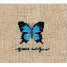 Набор для вышивания: PAPILLONS ULYSSES AUTOLYCUS (Бабочка  ULYSSES AUTOLYCUS)