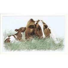 Набор для вышивания Рыжая корова, канва аида 16 ct