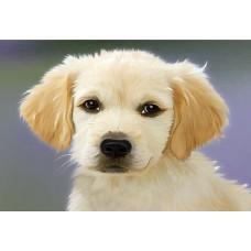 Набор юного художника Molly KH0869 Пушистый щенок (15 Цветов) 20х30 см