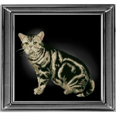 Набор для вышивания мулине КРАСА И ТВОРЧЕСТВО 20912 Американская короткошерстная кошка 28х28 см