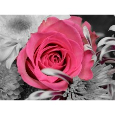 Картины мозаикой Molly KM0934 Роза на сером фоне 15х20 см