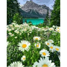 Картины по номерам Ромашки на фоне озера GX29451 40х50 тм Цветной
