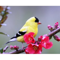 Картины мозаикой Molly KM0938 Весення птичка 15х20 см