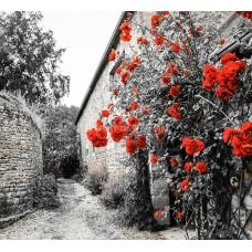 Картины по номерам Molly KH0966 Красные розы на каменной стене 40х50 см